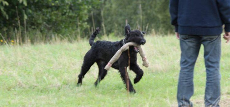 Årets sportshunde 2018