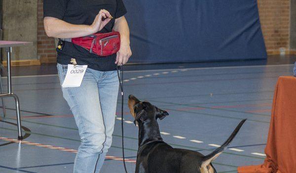 DKK's retningslinjer vedr. fremvisning af hunden